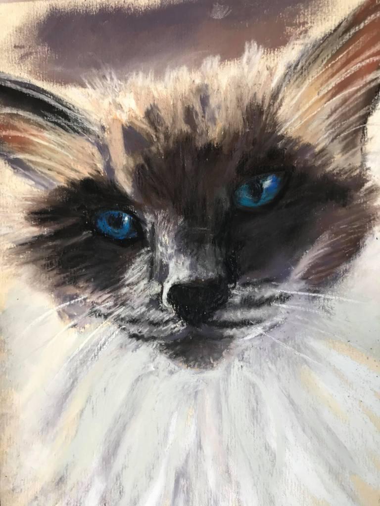Ragdoll, Minky, 7 Years Old in pastel